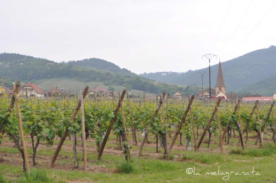 vigne-W900