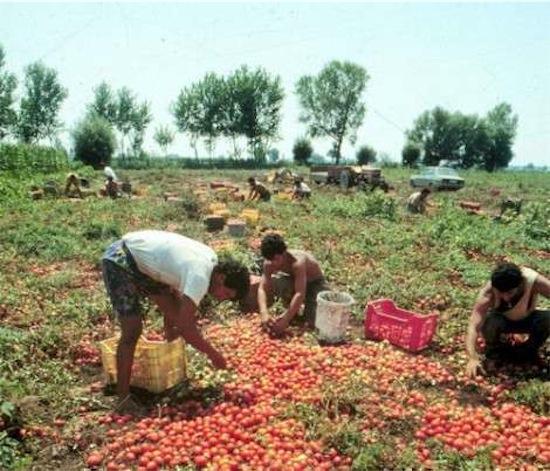 B agricoltura